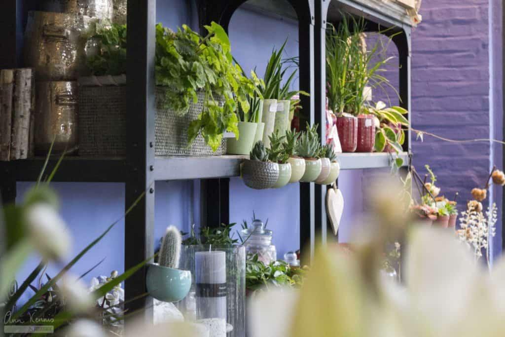 Bedrijfsfotografie Bloemen Anemone door Ann Kennis Fotografie