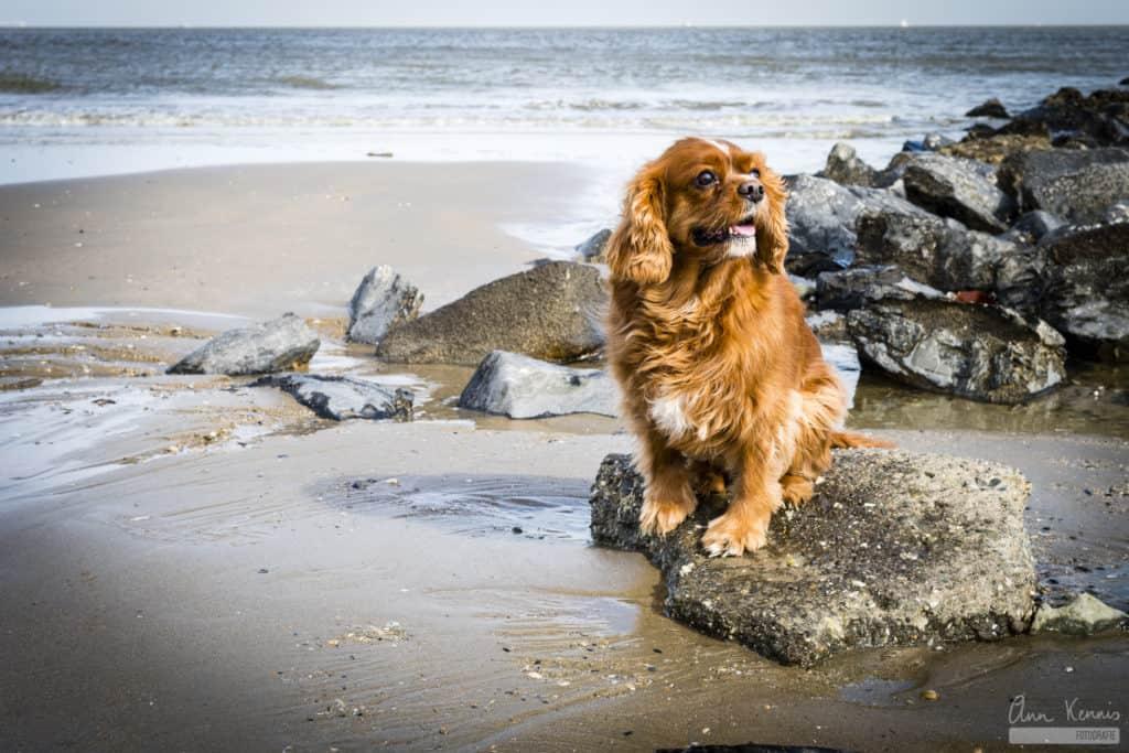 Hondenfotografie Ruby door Ann Kennis Fotografie